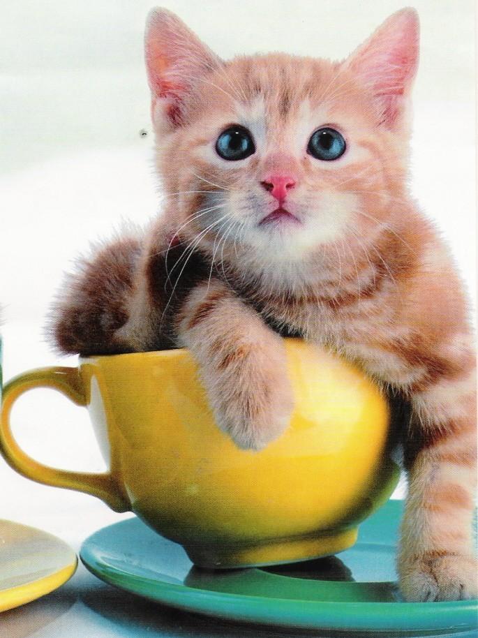 Fijate en el dibujo - Fundas para unas de gato ...